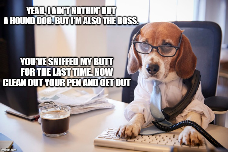 Boss Dog. |  YEAH, I AIN'T NOTHIN' BUT A HOUND DOG. BUT I'M ALSO THE BOSS. YOU'VE SNIFFED MY BUTT FOR THE LAST TIME. NOW CLEAN OUT YOUR PEN AND GET OUT | image tagged in boss,dog,beagle | made w/ Imgflip meme maker