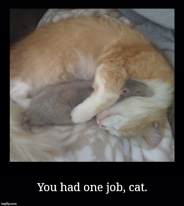 Ahem.. | You had one job, cat. | image tagged in cute cat,rat,you had one job | made w/ Imgflip meme maker