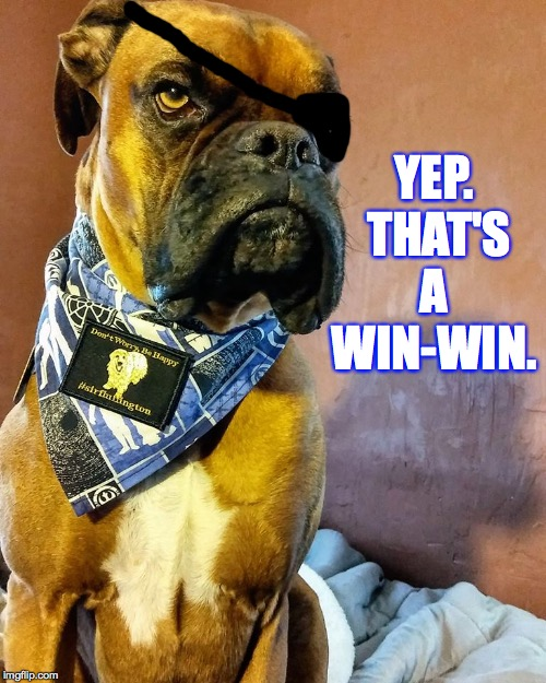 Grumpy Dog | YEP.  THAT'S A WIN-WIN. | image tagged in grumpy dog | made w/ Imgflip meme maker