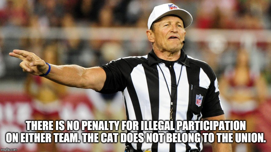Ed Hochuli rules |  THERE IS NO PENALTY FOR ILLEGAL PARTICIPATION ON EITHER TEAM. THE CAT DOES NOT BELONG TO THE UNION. | image tagged in logical fallacy referee | made w/ Imgflip meme maker