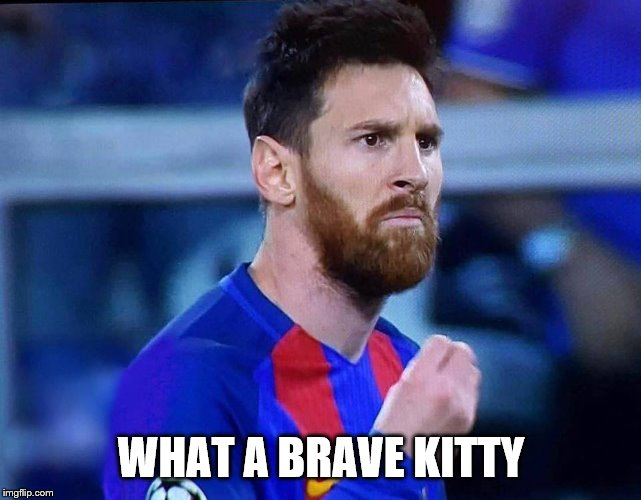 italian messi #2 | WHAT A BRAVE KITTY | image tagged in italian messi 2 | made w/ Imgflip meme maker