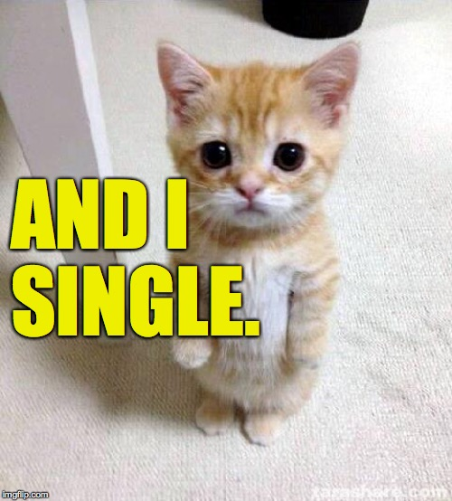 Cute Cat Meme | AND I SINGLE. | image tagged in memes,cute cat | made w/ Imgflip meme maker
