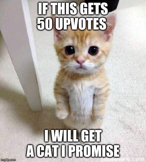 Cute Cat |  IF THIS GETS 50 UPVOTES; I WILL GET A CAT I PROMISE | image tagged in memes,cute cat | made w/ Imgflip meme maker