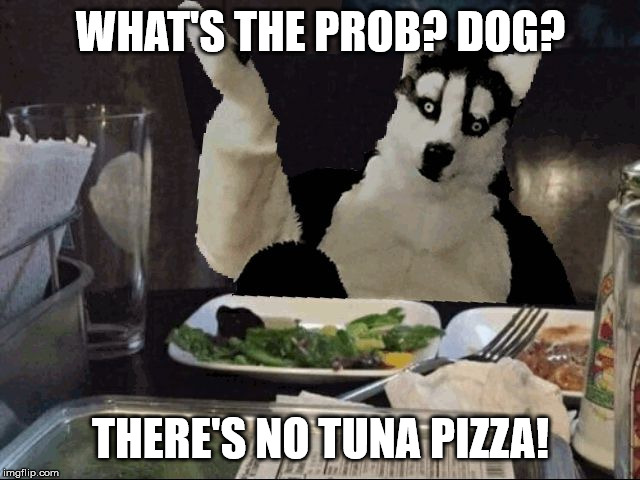 WHAT'S THE PROB? DOG? THERE'S NO TUNA PIZZA! | image tagged in robin husky | made w/ Imgflip meme maker