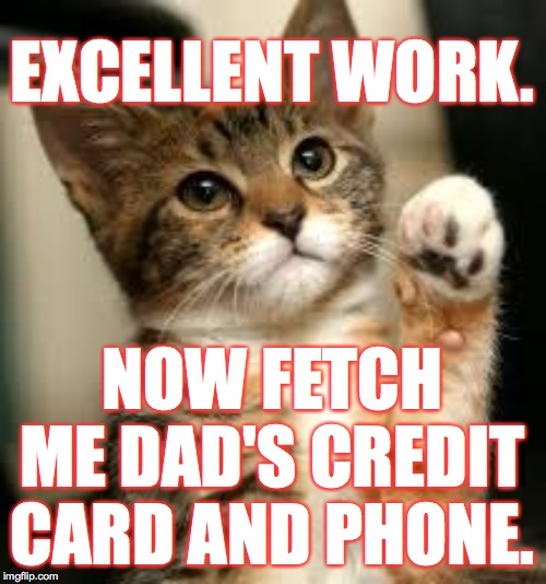 cute cat | EXCELLENT WORK. NOW FETCH ME DAD'S CREDIT CARD AND PHONE. | image tagged in cute cat | made w/ Imgflip meme maker