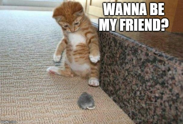 cat & mouse | WANNA BE MY FRIEND? | image tagged in cat  mouse | made w/ Imgflip meme maker