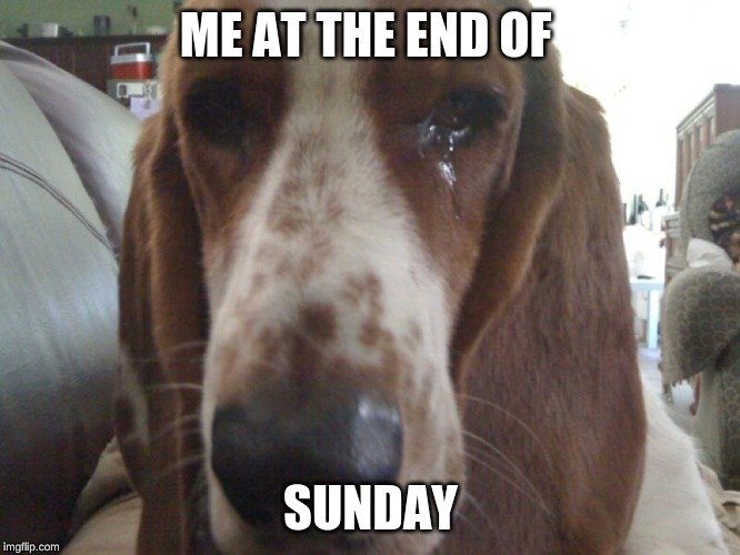 monday meme | ME AT THE END OF SUNDAY | image tagged in dog memes | made w/ Imgflip meme maker