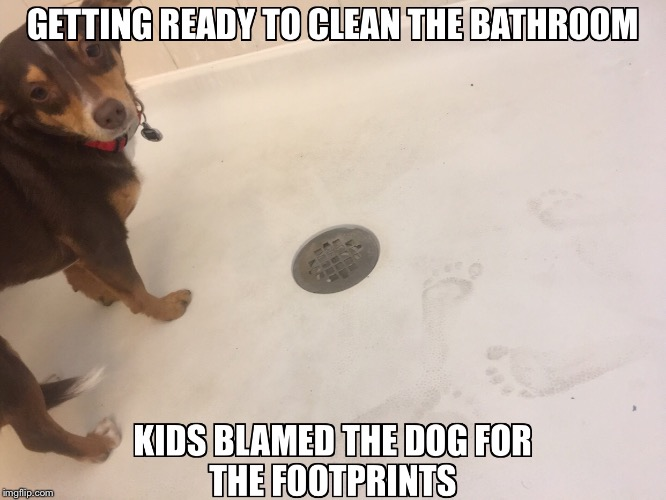 image tagged in pets,dog,kids,funny,parents | made w/ Imgflip meme maker