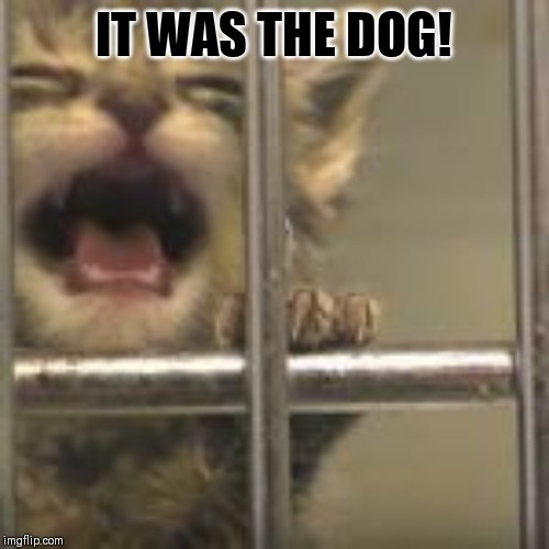 IT WAS THE DOG! | image tagged in kitty,jail cat | made w/ Imgflip meme maker