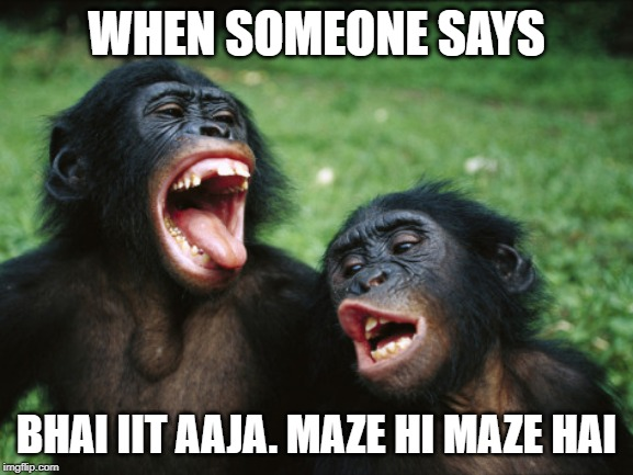 Bonobo Lyfe |  WHEN SOMEONE SAYS; BHAI IIT AAJA. MAZE HI MAZE HAI | image tagged in memes,bonobo lyfe | made w/ Imgflip meme maker