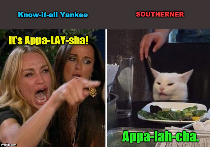 Bless your heart Yankee, now please go home. | It's Appa-LAY-sha! Appa-lah-cha. Know-it-all Yankee SOUTHERNER | image tagged in angry lady cat,southern,know it all yankee,humor | made w/ Imgflip meme maker