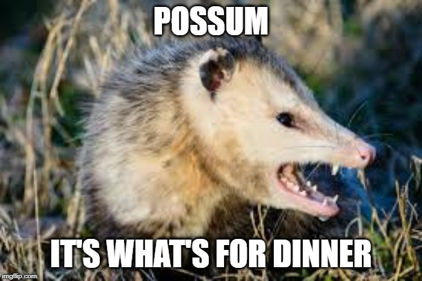 Possum |  POSSUM; IT'S WHAT'S FOR DINNER | image tagged in opposum,possum,possum for dinner | made w/ Imgflip meme maker