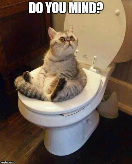 Toilet cat | DO YOU MIND? | image tagged in toilet cat | made w/ Imgflip meme maker