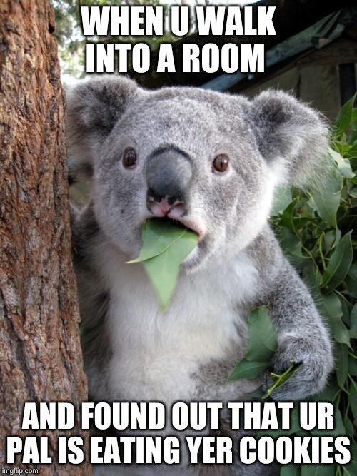 Surprised Koala Meme | WHEN U WALK INTO A ROOM AND FOUND OUT THAT UR PAL IS EATING YER COOKIES | image tagged in memes,surprised koala | made w/ Imgflip meme maker