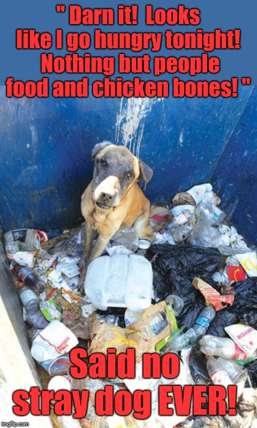 Truth | '' Darn it!  Looks like I go hungry tonight!  Nothing but people food and chicken bones! '' Said no stray dog EVER! | image tagged in the truth,dogs,choices | made w/ Imgflip meme maker