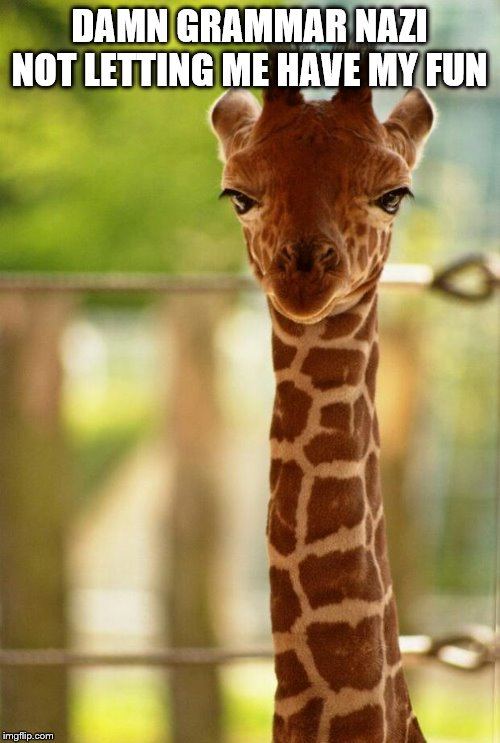 no comment giraffe | DAMN GRAMMAR NAZI NOT LETTING ME HAVE MY FUN | image tagged in no comment giraffe | made w/ Imgflip meme maker