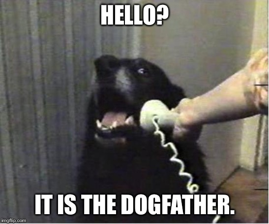 Yes this is dog |  HELLO? IT IS THE DOGFATHER. | image tagged in yes this is dog | made w/ Imgflip meme maker