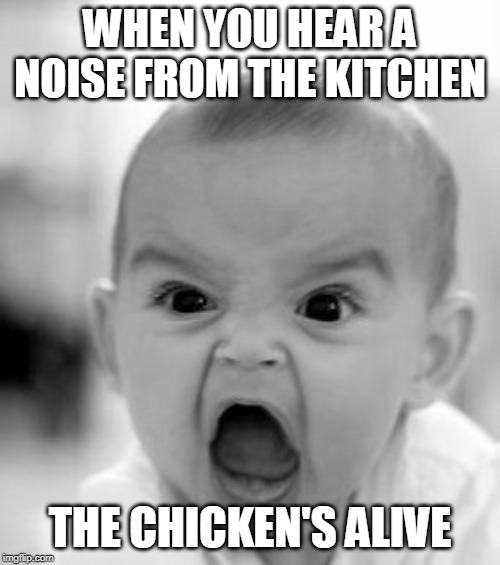 Angry Baby Meme | WHEN YOU HEAR A NOISE FROM THE KITCHEN THE CHICKEN'S ALIVE | image tagged in memes,angry baby | made w/ Imgflip meme maker