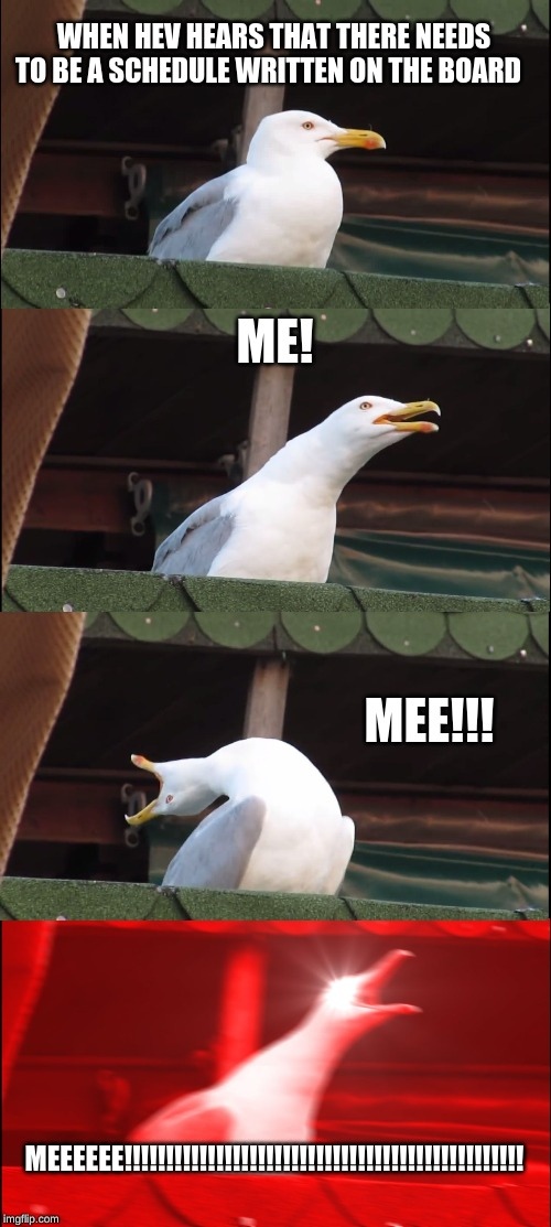 Inhaling Seagull Meme | WHEN HEV HEARS THAT THERE NEEDS TO BE A SCHEDULE WRITTEN ON THE BOARD ME! MEE!!! MEEEEEE!!!!!!!!!!!!!!!!!!!!!!!!!!!!!!!!!!!!!!!!!!!!!!!! | image tagged in memes,inhaling seagull | made w/ Imgflip meme maker