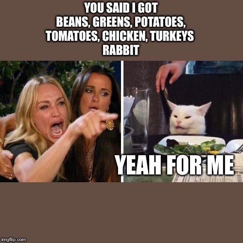 Smudge the cat | YOU SAID I GOT BEANS, GREENS, POTATOES, TOMATOES, CHICKEN, TURKEYS  RABBIT YEAH FOR ME | image tagged in smudge the cat | made w/ Imgflip meme maker