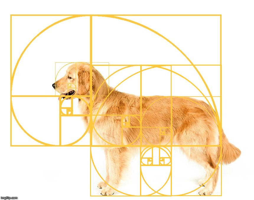 A golden retriever with golden spiral overlays. | image tagged in the golden ratio,golden retriever,dog,geometry,life | made w/ Imgflip meme maker
