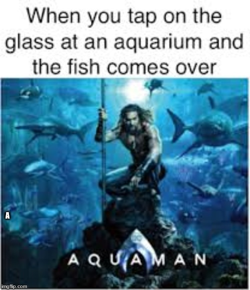 AqUAmAn | A | image tagged in fish | made w/ Imgflip meme maker