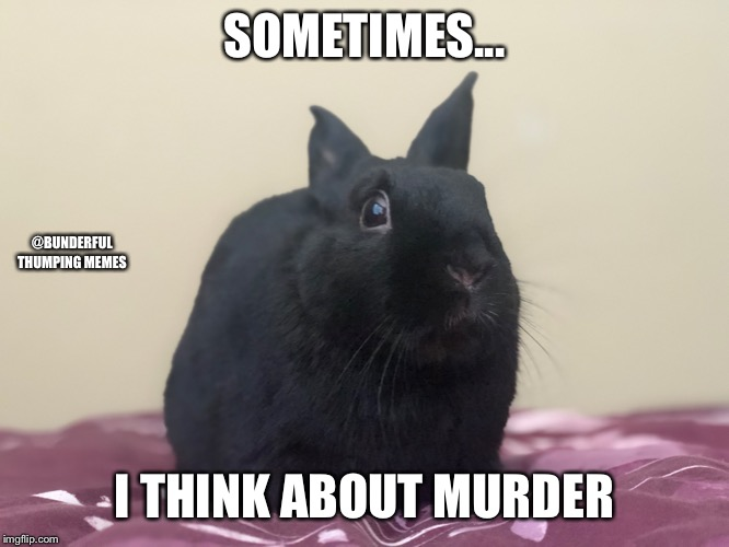SOMETIMES... I THINK ABOUT MURDER @BUNDERFUL THUMPING MEMES | image tagged in rabbit,bunny | made w/ Imgflip meme maker