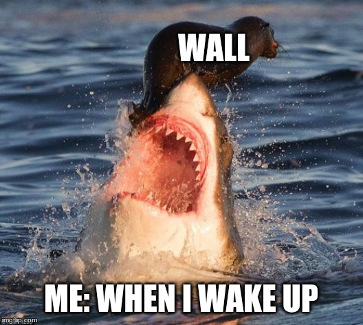 Travelonshark Meme | WALL ME: WHEN I WAKE UP | image tagged in memes,travelonshark | made w/ Imgflip meme maker