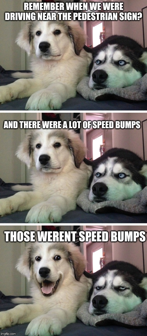 Bad pun dogs | REMEMBER WHEN WE WERE DRIVING NEAR THE PEDESTRIAN SIGN? AND THERE WERE A LOT OF SPEED BUMPS THOSE WERENT SPEED BUMPS | image tagged in bad pun dogs | made w/ Imgflip meme maker