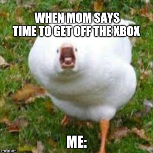 WHEN MOM SAYS TIME TO GET OFF THE XBOX ME: | image tagged in duck,funny,funny memes | made w/ Imgflip meme maker