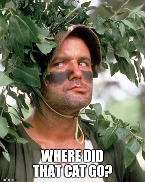 Bill Murray camouflaged | WHERE DID THAT CAT GO? | image tagged in bill murray camouflaged | made w/ Imgflip meme maker