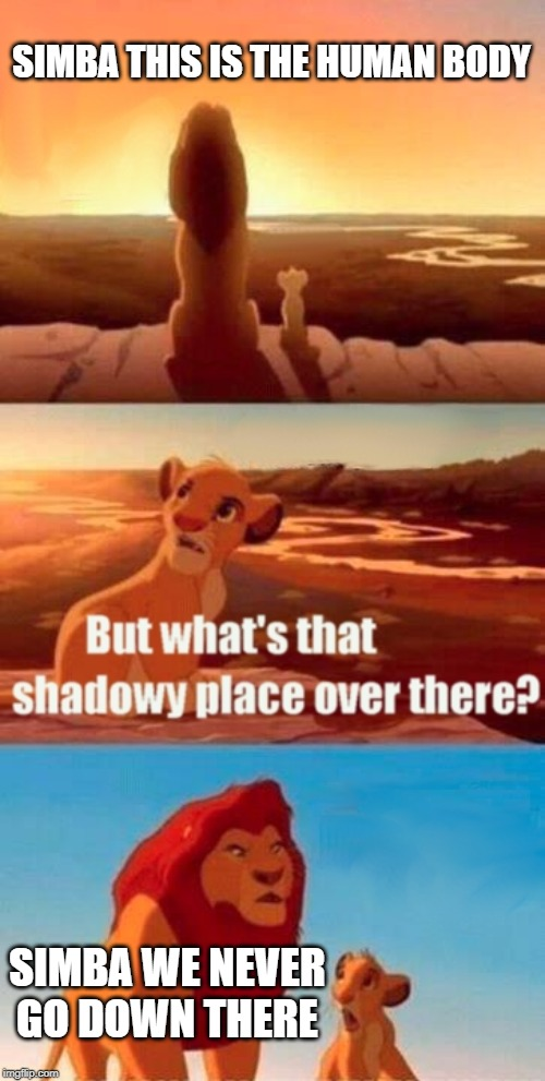 Simba Shadowy Place Meme | SIMBA THIS IS THE HUMAN BODY SIMBA WE NEVER GO DOWN THERE | image tagged in memes,simba shadowy place | made w/ Imgflip meme maker