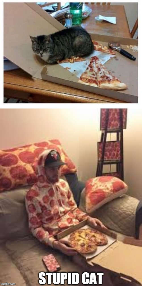 GET OFF MY PIZZA! | STUPID CAT | image tagged in pizza man,cats,funny cats | made w/ Imgflip meme maker