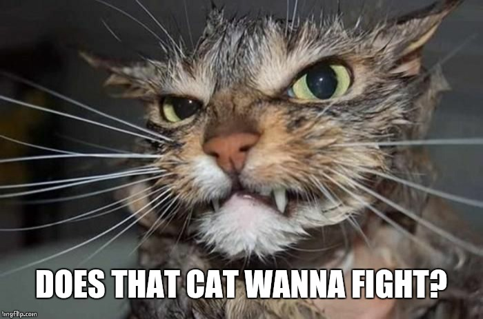 Angry Mad Cat | DOES THAT CAT WANNA FIGHT? | image tagged in angry mad cat | made w/ Imgflip meme maker