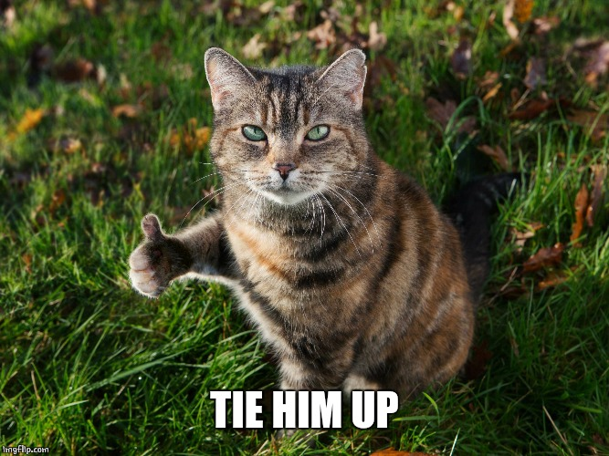 THUMBS UP CAT | TIE HIM UP | image tagged in thumbs up cat | made w/ Imgflip meme maker