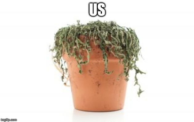 dead plant | US | image tagged in dead plant | made w/ Imgflip meme maker