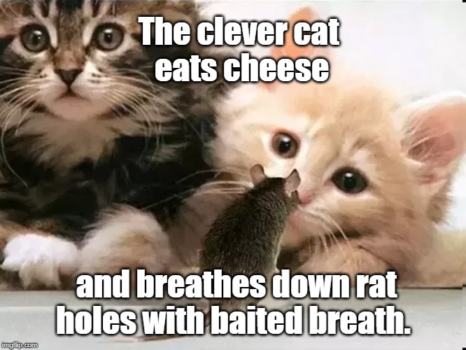 clever cat | The clever cat eats cheese and breathes down rat holes with baited breath. | image tagged in cat | made w/ Imgflip meme maker