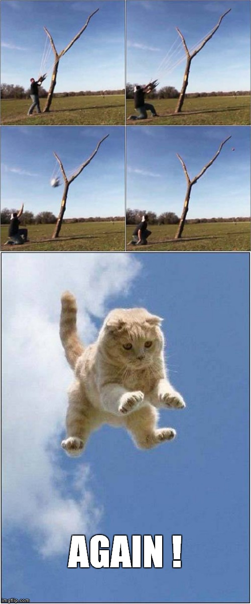 Catapult Fun | AGAIN ! | image tagged in fun,cats,game | made w/ Imgflip meme maker