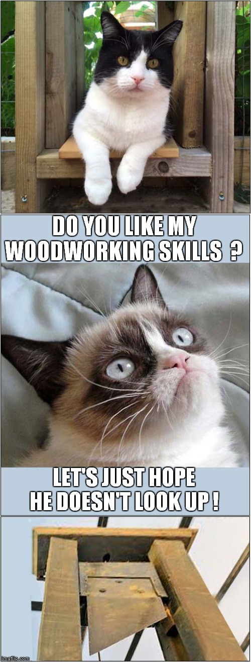 Grumpys Woodwork Project | DO YOU LIKE MY WOODWORKING SKILLS  ? LET'S JUST HOPE HE DOESN'T LOOK UP ! | image tagged in fun,cats,grumpy cat,guillotine | made w/ Imgflip meme maker