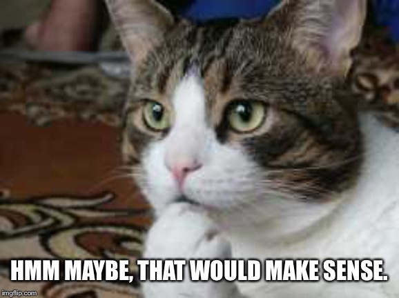 Ponder cat | HMM MAYBE, THAT WOULD MAKE SENSE. | image tagged in ponder cat | made w/ Imgflip meme maker