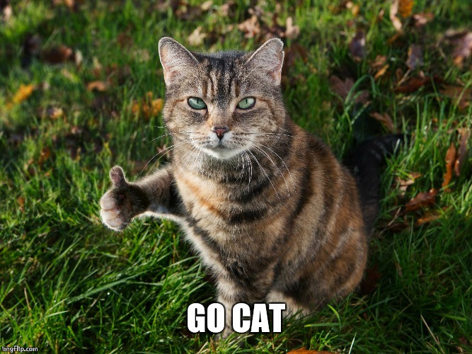 THUMBS UP CAT | GO CAT | image tagged in thumbs up cat | made w/ Imgflip meme maker