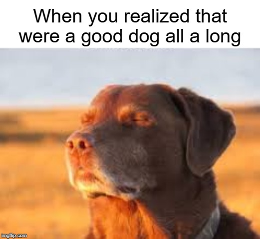 I was actually good! | When you realized that were a good dog all a long | image tagged in dogs,cute,funny,dog memes,memes | made w/ Imgflip meme maker