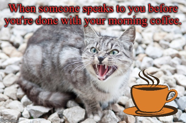 Every day... | When someone speaks to you before you're done with your morning coffee. | image tagged in hissing cat,coffee addict,coffee,i love coffee,memes | made w/ Imgflip meme maker