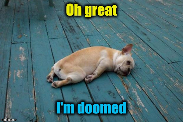 Tired dog | Oh great I'm doomed | image tagged in tired dog | made w/ Imgflip meme maker