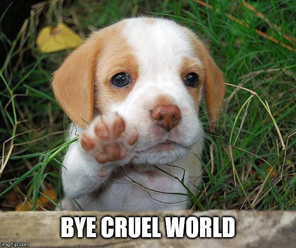 dog puppy bye | BYE CRUEL WORLD | image tagged in dog puppy bye | made w/ Imgflip meme maker