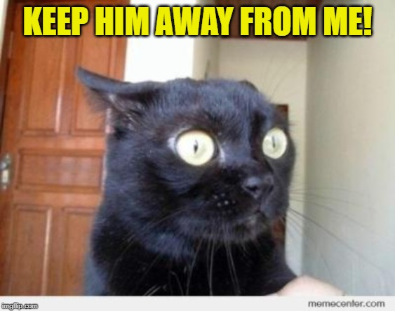 Scared Cat | KEEP HIM AWAY FROM ME! | image tagged in scared cat | made w/ Imgflip meme maker