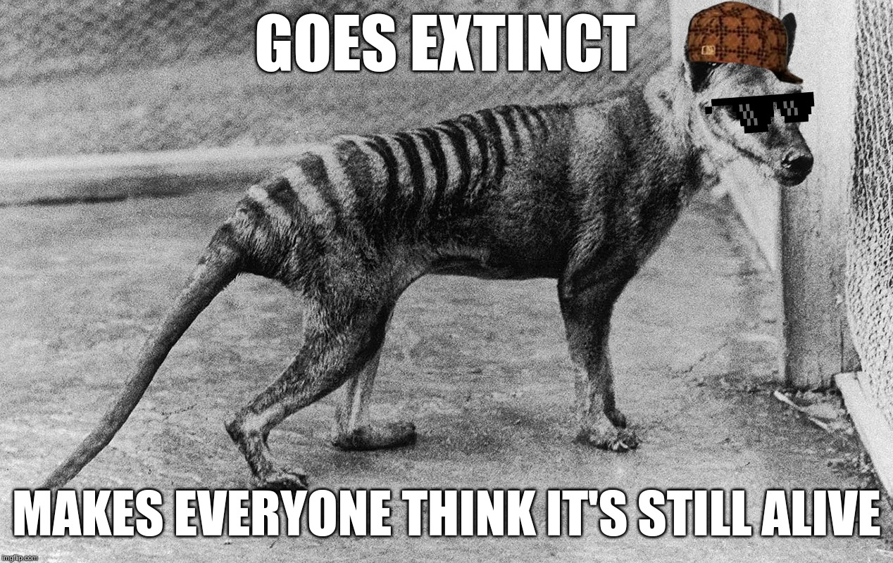 scumbag tasmanian tiger | GOES EXTINCT MAKES EVERYONE THINK IT'S STILL ALIVE | image tagged in memes,extinction,australia,tiger | made w/ Imgflip meme maker