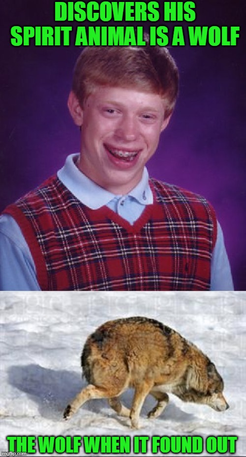 Poor thing will never live it down |  DISCOVERS HIS SPIRIT ANIMAL IS A WOLF; THE WOLF WHEN IT FOUND OUT | image tagged in memes,bad luck brian | made w/ Imgflip meme maker