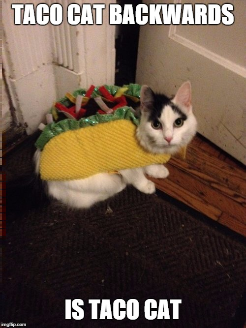 Taco Cat |  TACO CAT BACKWARDS; IS TACO CAT | image tagged in taco cat,cat | made w/ Imgflip meme maker