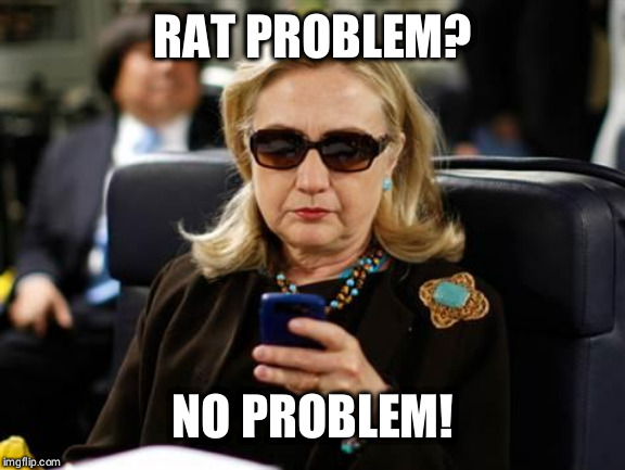 Hillary Clinton Cellphone | RAT PROBLEM? NO PROBLEM! | image tagged in memes,hillary clinton cellphone | made w/ Imgflip meme maker